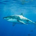 Four Ways to Deal with Sharks and Minnows in the Office